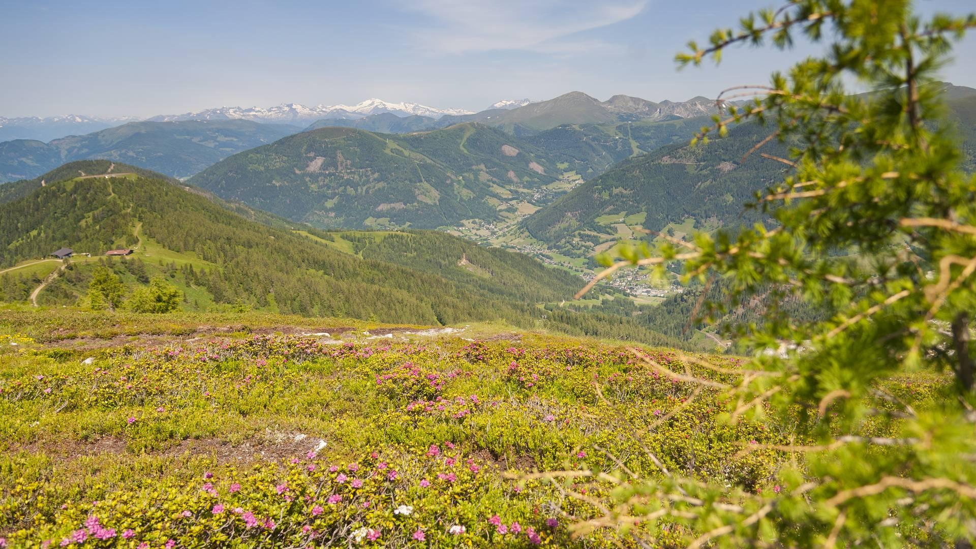 Wöllaner Nock. Nocky Mountains werden die Nockberge im gleichnamigen Biosphärenpark aufgrund ihrer sanften Rundungen oft liebevoll genannt.