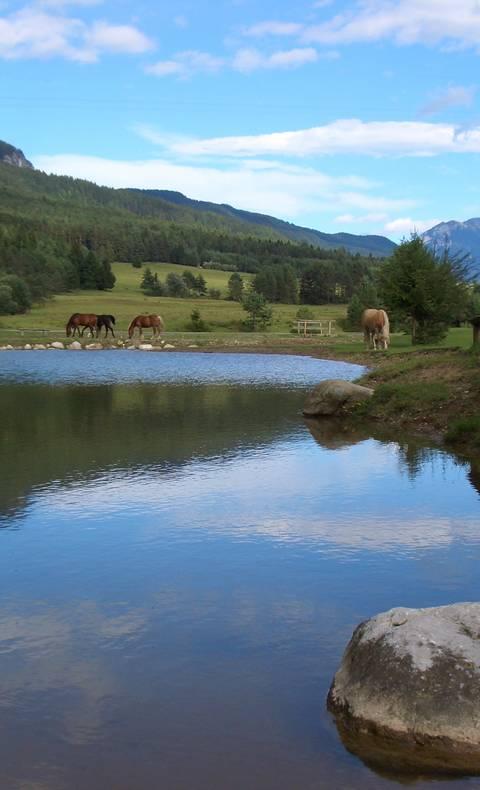 Naturgarten Siebenbrünn in St. Stefan im Gailtal in der Naturarena Kärnten