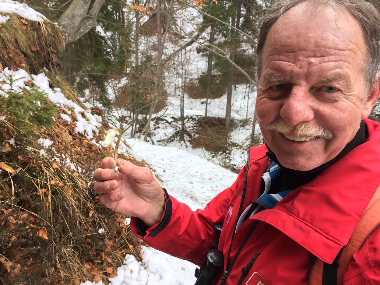 Schneerosenwanderung im Gitschtal