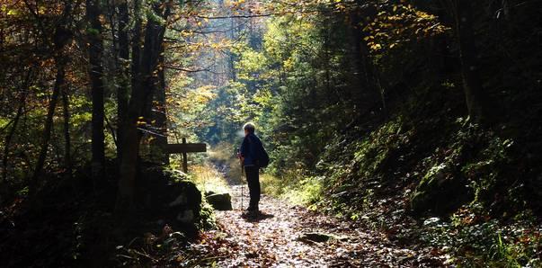 Herbstspaziergang durch den Hajnžgraben, Zell-Pfarre