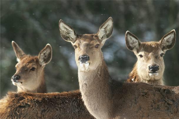 Wildtierfütterung im Biosphärenpark Nockberge