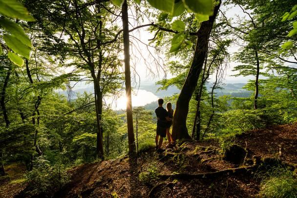 Waldstimmung am Slow Trail Kitzelberg am Klopeiner See