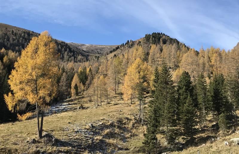 Wandergenuss am Falkert