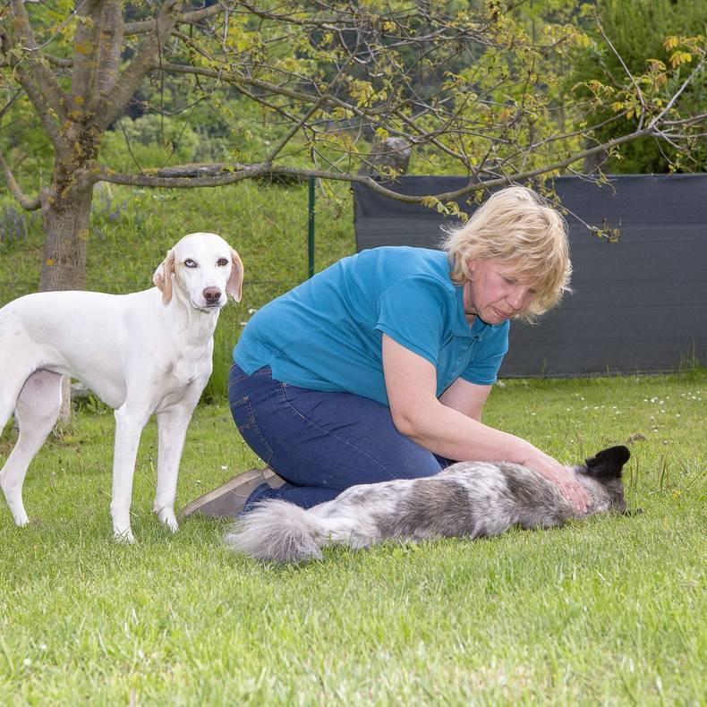 Ferienhaus Saak Alianne Oomen Hundemassage