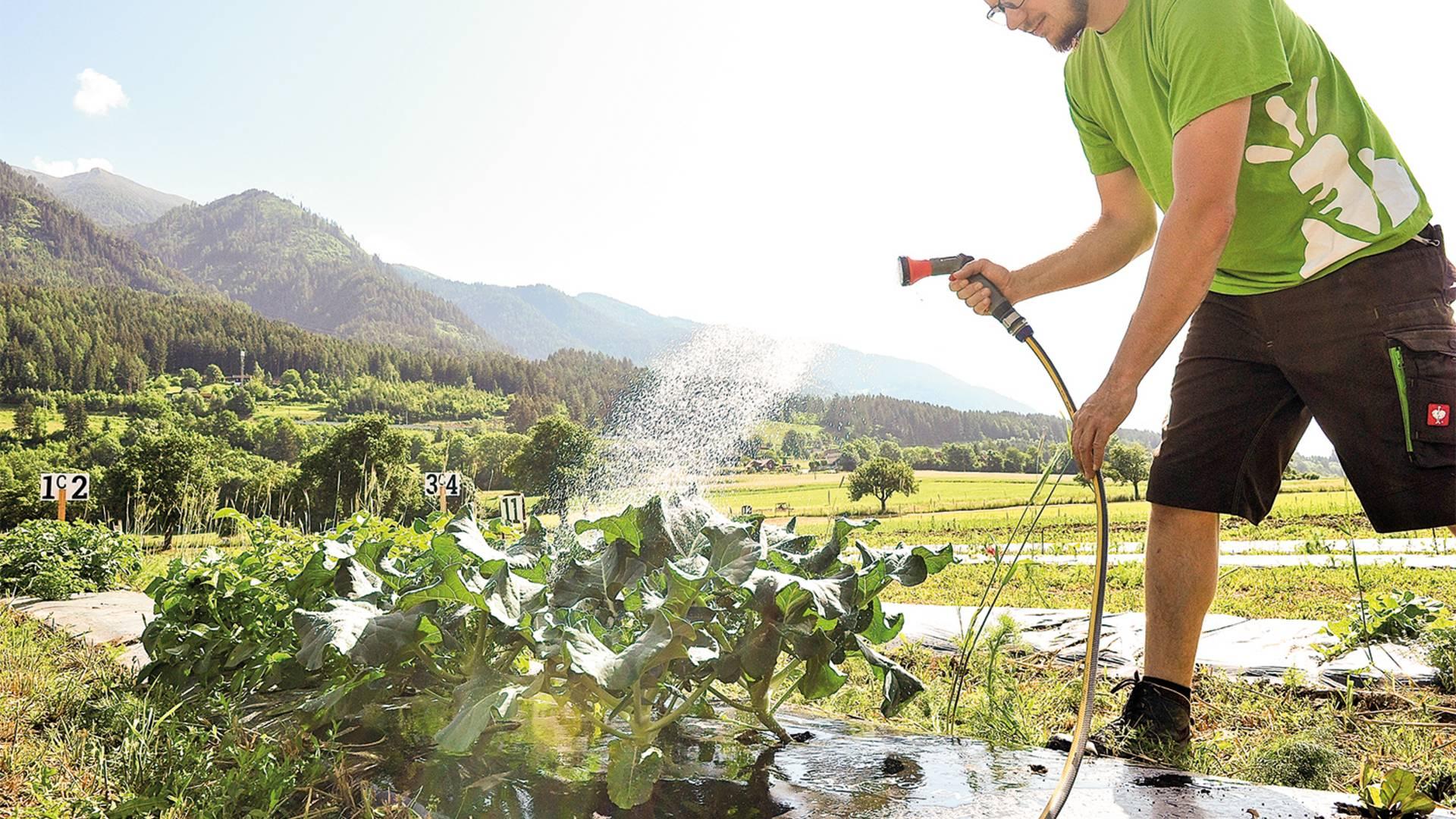 myAcker.com regelmäßiges Gießen der Pflanzen