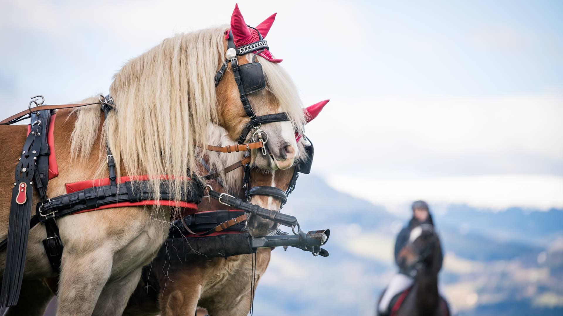 Pferdesegnung Winter Brauchtum