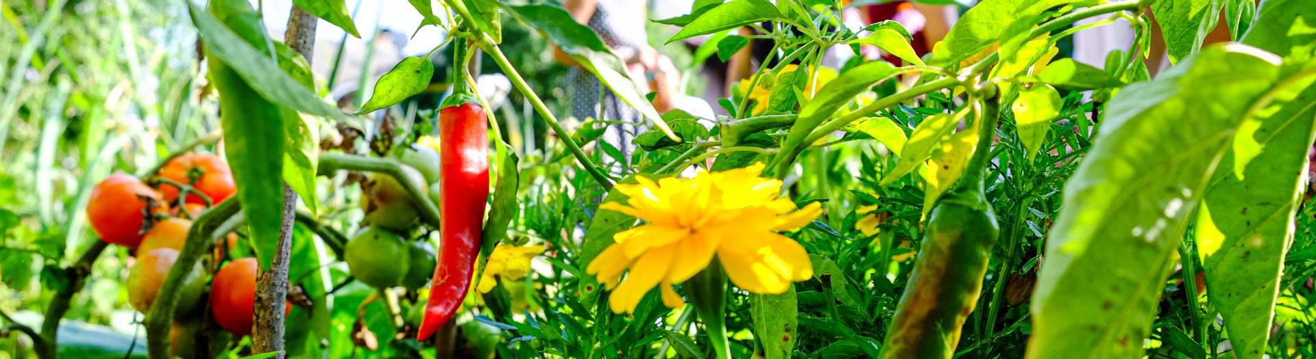 Ein wilder Garten birgt viele Schaetze Wilde Koechelei in der Labsalerie