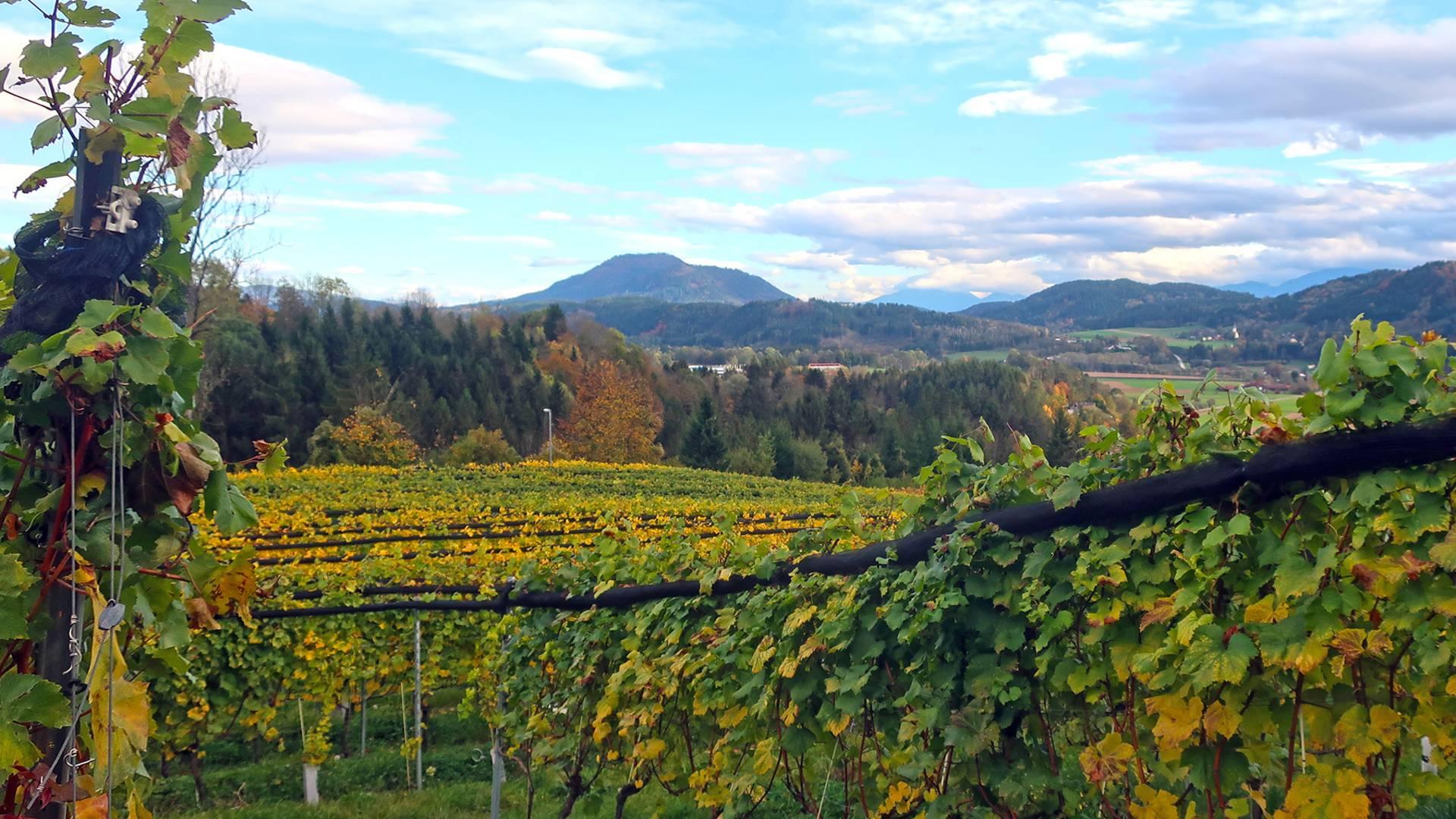 J. Kreulitsch Wein auf der Burg Glanegg